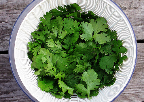 The Truth About Cilantro